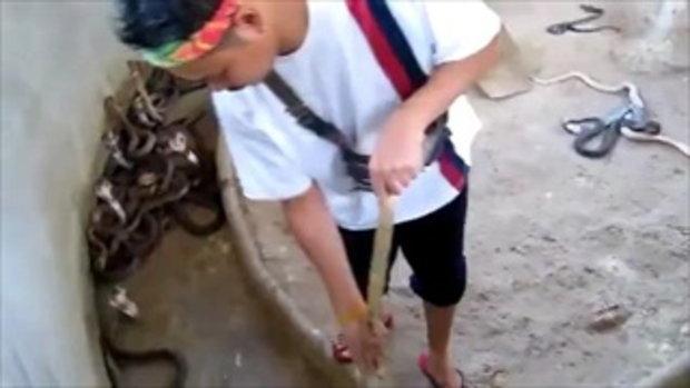 แชร์ว่อน คลิปหวาดเสียว หนุ่มจับงูเห่าโยนทีละตัวแล้วกวาดพื้นฟาร์มงู
