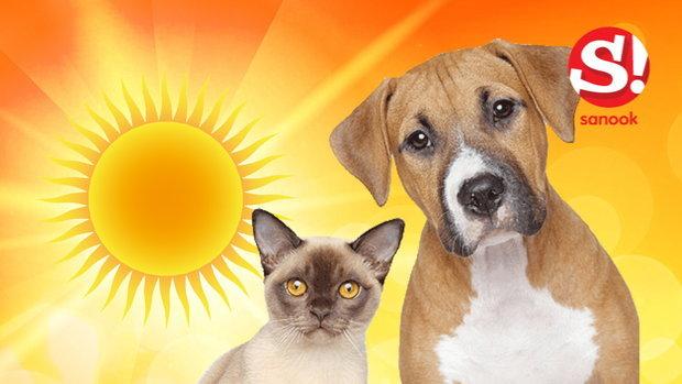 วิธีดูแลสัตว์เลี้ยง จากโรคลมแดดในหน้าร้อน