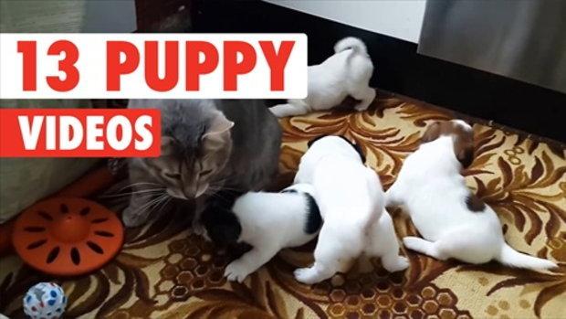 วีดีโอน่ารักของเหล่าลูกสุนัข