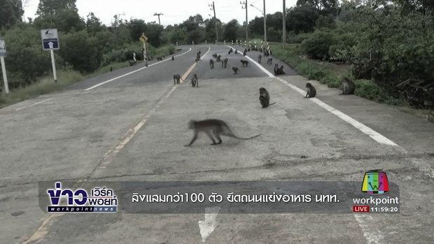 ลิงแสมกว่า100 ตัว ยึดถนนแย่งอาหาร นทท  l ข่าวเวิร์คพอยท์ l 4 ต.ค. 60