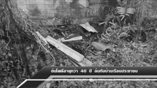 Sakorn News : ต้นโพธิ์ 40 ปี
