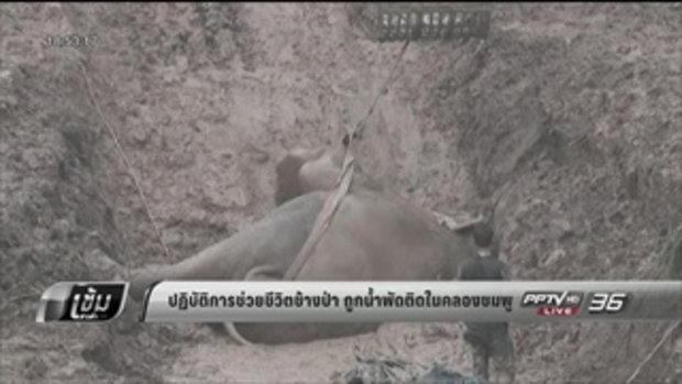 ปฏิบัติการช่วยชีวิตช้างป่า ถูกน้ำพัดติดในคลองชมพู - เข้มข่าวค่ำ
