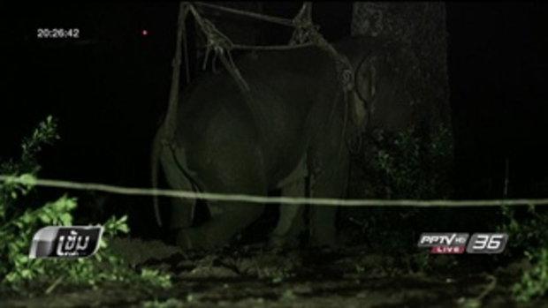 """สัตวแพทย์เผยขาหลังช้างป่า มีปัญหา ใช้การไม่ได้ ชาวบ้าน ตั้งชื่อ """"พังธารา"""" - เข้มข่าวค่ำ"""