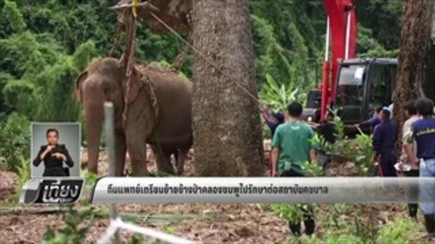 ทีมแพทย์เตรียมย้ายช้างป่าคลองชมพูไปรักษาต่อที่สถาบันคชบาล - เที่ยงทันข่าว