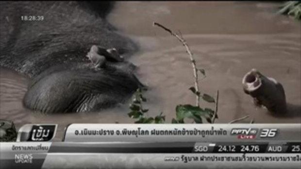 เนินมะปราง จ.พิษณุโลก ฝนตกหนักช้างป่าถูกน้ำพัด - เข้มข่าวค่ำ