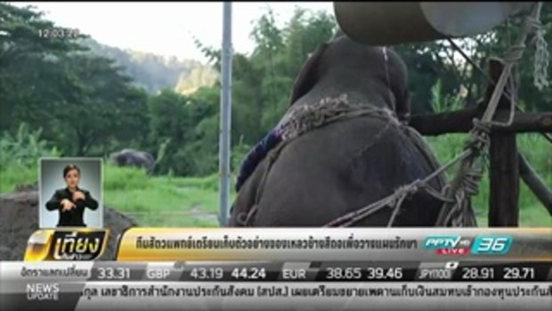 ทีมสัตวแพทย์เตรียมเก็บตัวอย่างของเหลวช้างสีดอเพื่อวางแผนรักษา - เที่ยงทันข่าว