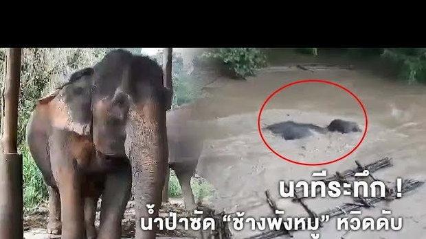 ควาญช้างตะโกนช่วยระทึก !