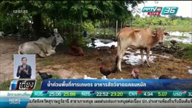 น้ำท่วมพื้นที่การเกษตร อาหารสัตว์ขาดแคลนหนัก - เที่ยงทันข่าว