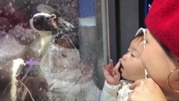 มาฟังคำที่ เป่าเปา พูดกับเพนกวินที่เกาหลี ช่างเจรจาจริงๆ