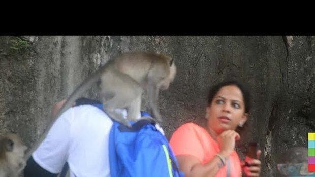 จ๋อทำเสียเรื่อง ! นทท.ผวาวัดถ้ำเสือวิปัสสนา ลิงแย่งของ ทำลายทรัพย์สิน