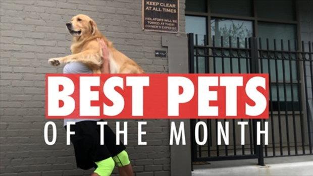 วีดีโอสุดยอดสัตว์เลี้ยงแห่งเดือน| October 2017