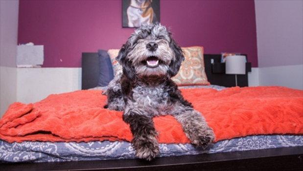 ความหรูหราของโรงแรมสุนัขในนิวยอร์ค