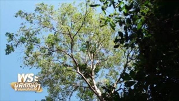 คนค้นฅน : พระผู้พิทักษ์ป่า แห่งแดนอีสานใต้ ช่วงที่ 1/4 (21 พ.ย.60)