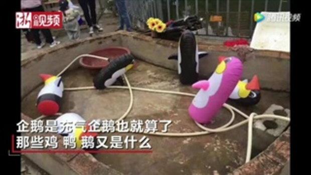 คุณหลอกดาว! สวนสัตว์จีนโม้มีเพนกวิน พอไปดูอึ้งหนัก แค่ตุ๊กตาเป่าลม