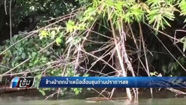 ช้างป่าตกน้ำเหนือเขื่อนขุนด่านปราการชล - เข้มข่าวค่ำ