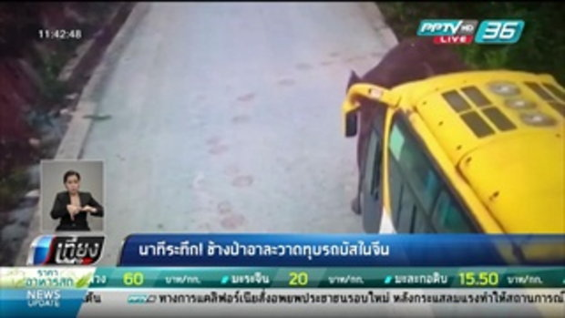 นาทีระทึก! ช้างป่าอาละวาดทุบรถบัสในจีน - เที่ยงทันข่าว