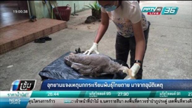 อุทยานแจงเหตุนกกระเรียนพันธุ์ไทยตาย มาจากอุบัติเหตุ - เข้มข่าวค่ำ