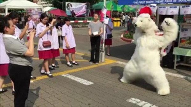 เคยเห็นยัง.. หมีสายแดนซ์
