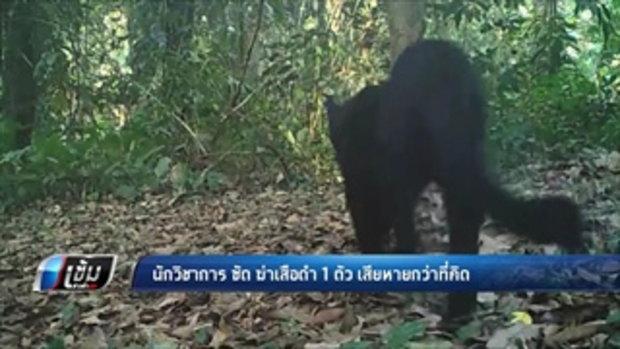 นักวิชาการ ซัด ฆ่าเสือดำ 1 ตัว เสียหายกว่าที่คิด - เข้มข่าวค่ำ