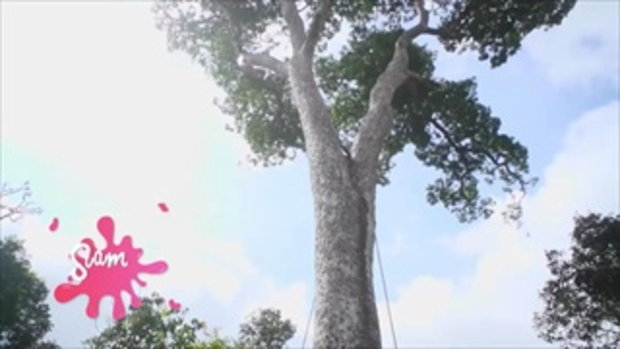 กบนอกกะลา : SIAM BERRY จี๊ดจ๊าดทั่วไทย (1) ช่วงที่ 3/4 (15 ก.พ.61)