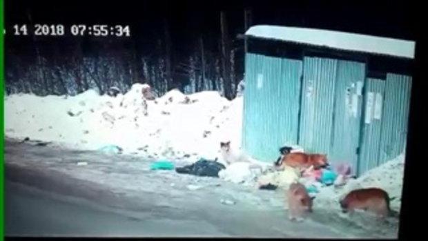 เกือบไม่ถึงบ้าน! เก๋งตาไวถอยรถไล่บี้ฝูงสุนัขจรจัด ช่วยนักเรียนสาวรอดโดนรุมขย้ำ