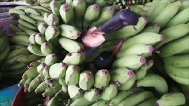 เจอแล้ว! กล้วย ติด GPS หลังถูกคนร้ายขโมยตัดเครือขาย
