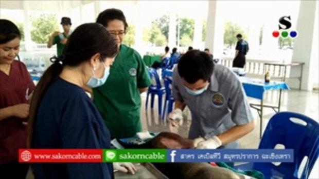 Sakorn News : ทำหมันสุนัขและแมว