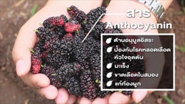 กบนอกกะลา : SIAM BERRY จี๊ดจ๊าดทั่วไทย (2) Full (22 ก.พ.61)