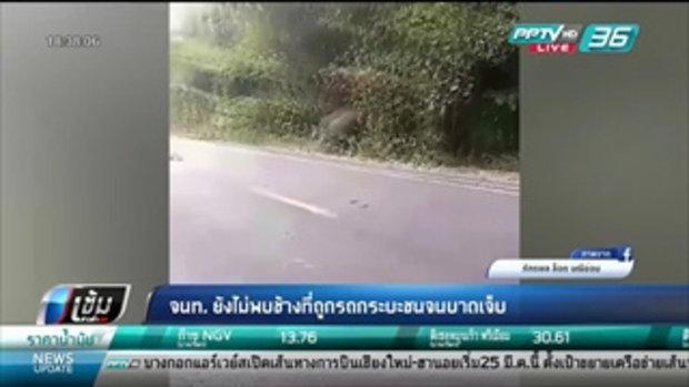 จนท. ยังไม่พบช้างที่รถถูกกระบะชนจนบาดเจ็บ - เข้มข่าวค่ำ
