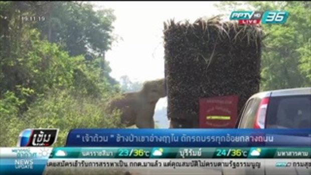 """""""เจ้าด้วน"""" ช้างป่าเขาอ่างฤาไน ดักรถบรรทุกอ้อยกลางถนน - เข้มข่าวค่ำ"""