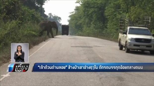 เจ้าด้วนด่านลอย ช้างป่าเขาอ่างฤาใน ดักรถบรรทุกอ้อยกลางถนน - เที่ยงทันข่าว