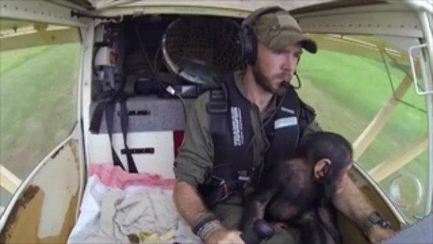 รอดปาฏิหาริย์ นักบินฮีโร่ช่วยลูกลิงซิมแปนซีกำพร้า นั่งฮ.มาแบบงงๆ ดูตื่นเต้น น่ารักจริง