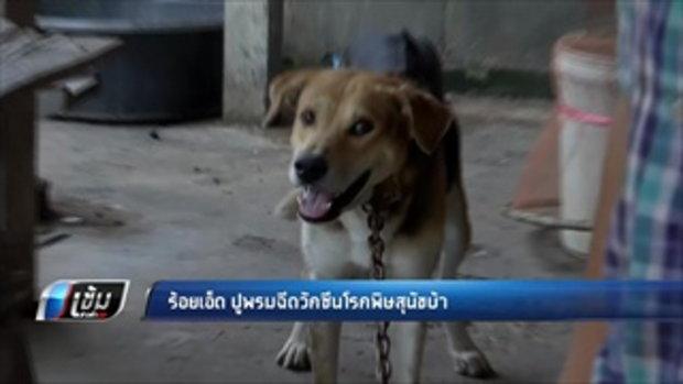 ร้อยเอ็ด ปูพรมฉีดวัคซีนโรคพิษสุนัขบ้า  - เข้มข่าวค่ำ