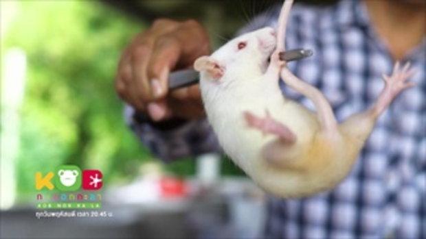 กบนอกกะลา : อาหารสัตว์ มีชีวิต ช่วงที่ 4/4 (1 มี.ค.61)