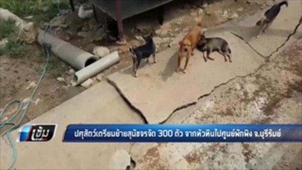 ปศุสัตว์เตรียมย้ายสุนัขจรจัด 300 ตัว จากหัวหินไปศูนย์พักพิง จ.บุรีรัมย์ - เข้มข่าวค่ำ