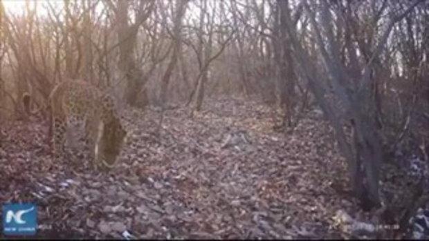 จีนติดกล้องอินฟาเรด 20 ตัวในเขตอนุรักษ์ ดูแลและศึกษาชีวิตสัตว์ป่า