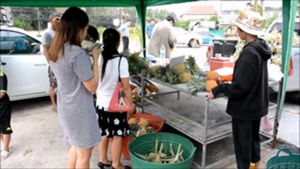 ชาวสวนจันทบุรีโอด ยอมขายสับปะรดขาดทุน ราคาดิ่งวูบต่ำสุดเหลือลูกละ 1 บาท