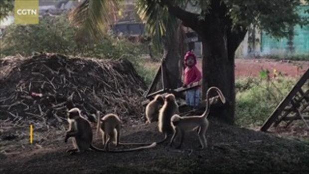 น่าทึ่ง ด.ช. วัย 2 ปี คุ้นเคยกับฝูงลิงกว่า 20 ตัว ไม่มีตัวไหนทำร้ายเขาเลย