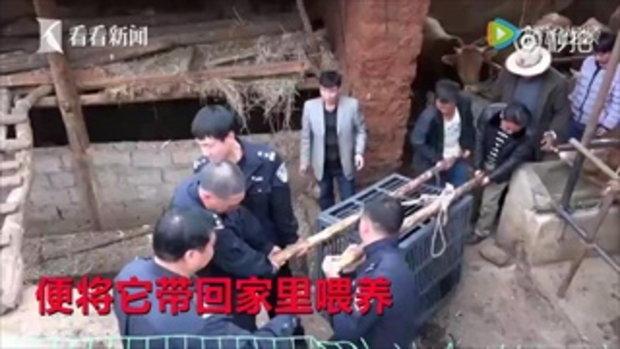 ชายจีนหวิดโดนโทษหนัก หลังคิดว่าลูกหมีเป็นหมาเลยเก็บมาเลี้ยง
