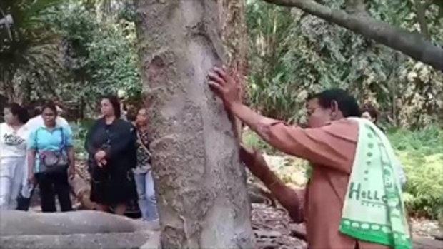 คอหวยเจอเลขเด็ด ต้นชะโนด-รากต้นมะเดื่อยักษ์ ส่องได้ 25