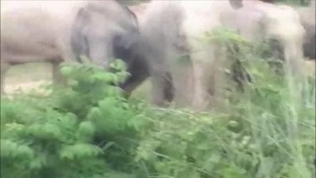 นักท่องเที่ยว เเห่ชมโขลงช้างป่ากว่า 70 ตัว ใกล้ชิด