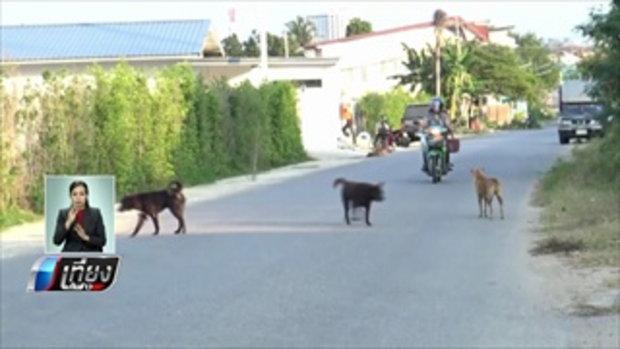 ปศุสัตว์หัวหินเร่งสกัดโรคพิษสุนัขบ้าพื้นที่สีแดง หวั่นระบาดสู่ลิง - เที่ยงทันข่าว