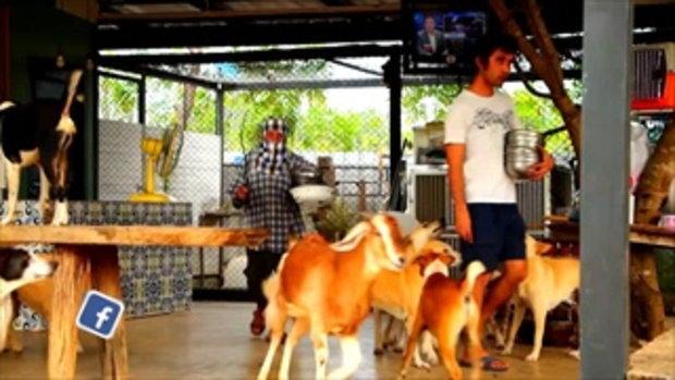 คนมันส์พันธุ์อาสา : อาสาซ่อมสร้างและดูแลบ้านพักเพื่อสัตว์จรจัด ช่วงที่ 1/3 (11 มี.ค.61)