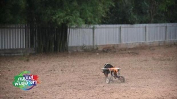 คนมันส์พันธุ์อาสา : อาสาซ่อมสร้างและดูแลบ้านพักเพื่อสัตว์จรจัด ช่วงที่ 3/3 (11 มี.ค.61)