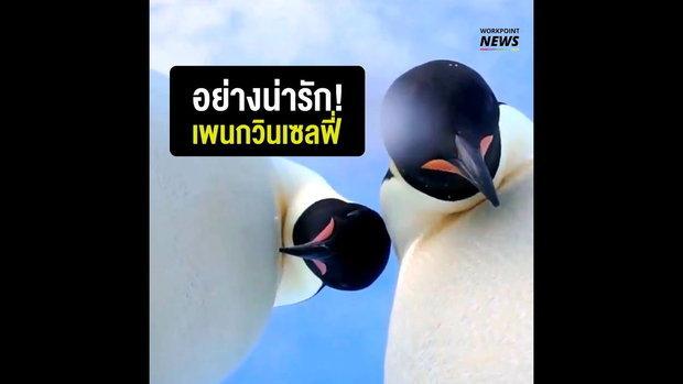 มาชมความน่ารักของเจ้านกแพนกวินจักรพรรดิ ที่ประเทศออสเตเรีย ที่ดูเหมือนว่ามันกำลังถ่ายเซลฟี่กันอยู่