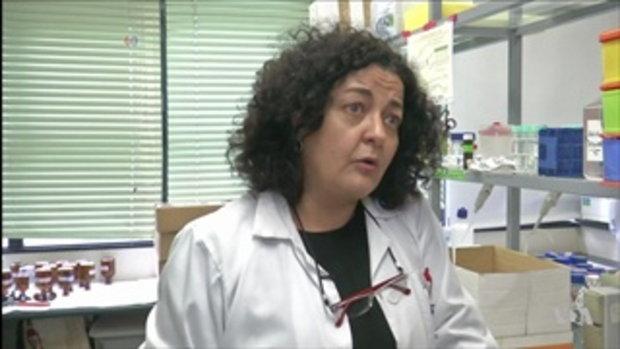 """นักวิจัยพบเชื้อโรคนับล้านชนิดมาจาก """"ชั้นบรรยากาศ"""""""