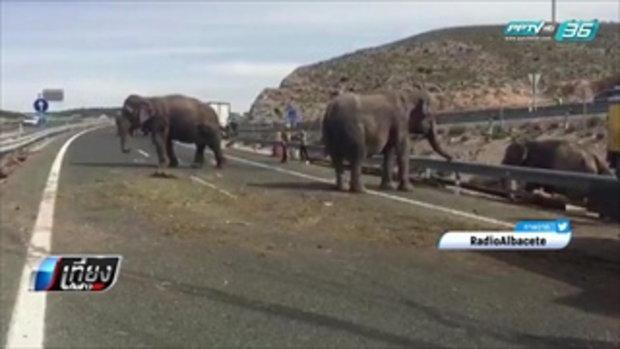 รถบรรทุกคณะละครสัตว์พลิกคว่ำ ช้างหลุดป่วนทางหลวงสเปน - เที่ยงทันข่าว