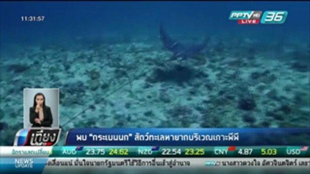 """พบ """"กระเบนนก"""" สัตว์ทะเลหายากบริเวณเกาะพีพี - เที่ยงทันข่าว"""