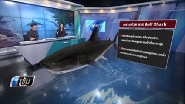 นักวิจัย ชี้ฉลามที่กัดนักท่องเที่ยวไม่น่ากลัว จนต้องมีการกำจัดทิ้ง - เข้มข่าวค่ำ