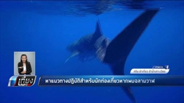 หาแนวทางปฏิบัติสำหรับนักท่องเที่ยวหากพบฉลามวาฬ - เที่ยงทันข่าว